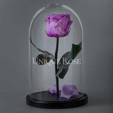 Cиреневая роза в колбе Premium