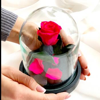 Роза в колбе Дюймовочка Hot Pink / Ярко-розовый