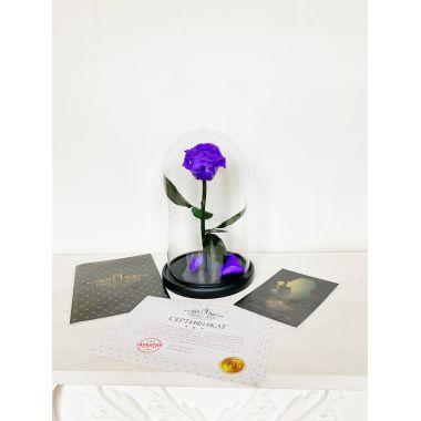 Vampire Violet фиолетовая роза в колбе Premium
