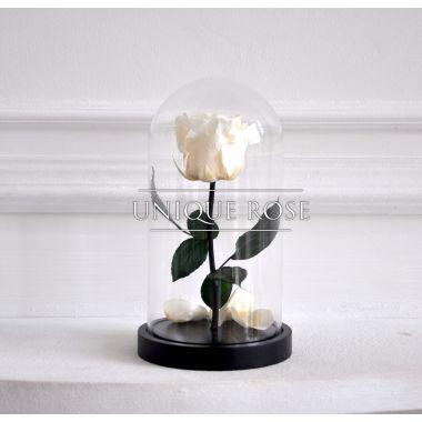 Snow White, белая роза в колбе Mini
