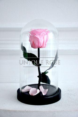 История появления роз в колбах