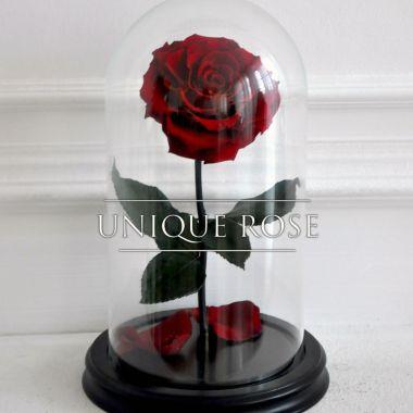 Burgundi Wine, бордовая роза в колбе Premium